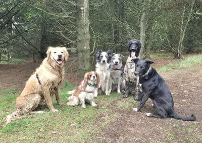 Dog Walker Heaton NE6